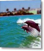 Bay Dolphins Metal Print