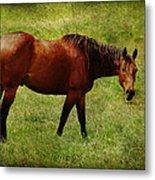 Bay Horse Metal Print