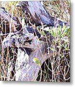 Bayberry And Driftwood Metal Print