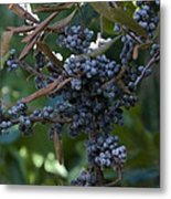 Bayberry Metal Print