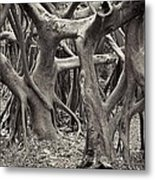 Baynan Roots Metal Print