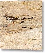 Beach Bird 2 Metal Print