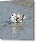 Beach Bird Bath 4 Metal Print
