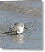 Beach Bird Bath 5 Metal Print