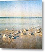 Beach Combers - Seagull Art By Sharon Cummings Metal Print