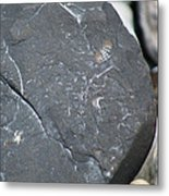 Beach Fossil Metal Print