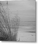 Beach Grass In The Snow Metal Print