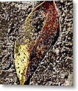 Beach Leaf Metal Print