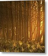 Beach Light Through The Trees Metal Print