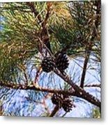 Beach Pine Metal Print