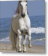 Beach Run Metal Print