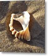 Beach Shell Metal Print by David Yack
