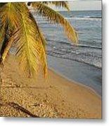 Beach Under Golden Palm Metal Print