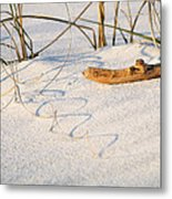 Beach Wood And Curly-q Metal Print