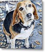 Beagle In Autumn Metal Print