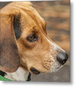 Beagle Loyalty Metal Print
