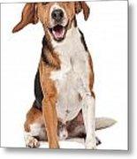 Beagle Mix Dog Isolated On White Metal Print
