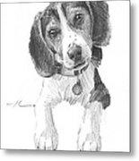 Beagle Puppy Pencil Portrait Metal Print