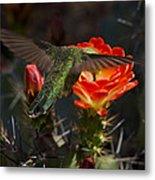 Beak Deep In Nectar  Metal Print