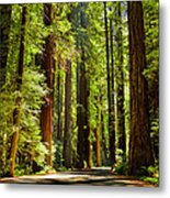 Beam Of Light In The Trees Metal Print