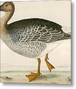 Bean Goose Metal Print