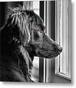 Bear At Window Metal Print