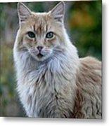 Bear-cat Metal Print by Jacquelyn Roberts
