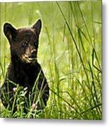 Bear Cub In Clover Metal Print