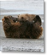 Bear Cubs Nurse Metal Print