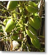 Bear Fruit Metal Print