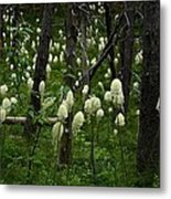 Bear Grass Metal Print