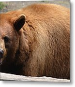 Bear In The Bath Metal Print