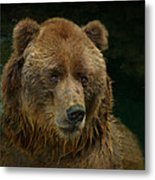 Bear In The Pool Metal Print