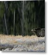 Bear Lake Metal Print