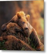 Bear Portrait Metal Print
