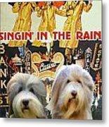 Bearded Collie Art Canvas Print - Singin In The Rain Movie Poster Metal Print