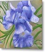 Bearded Iris Blue Iris Floral  Metal Print