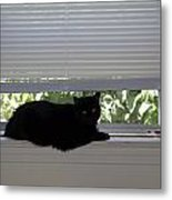 Beare On Window Metal Print