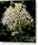Beargrass Bloom Metal Print