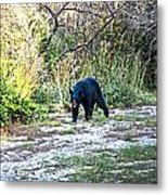 Bearly Stroll Metal Print
