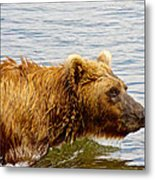 Bear's Eye View Of Swimming Grizzly In Moraine River In Katmai Metal Print