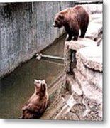 Bears Feeding Time At The Zoo Metal Print