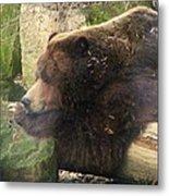 Bears In Ohio. No.23 Metal Print