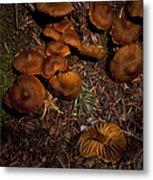 Beartooth Mountain Mushrooms   #3661 Metal Print