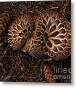 Beartooth Mountain Mushrooms   #9142 Metal Print