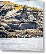 Seals And Rock Scupltures Metal Print