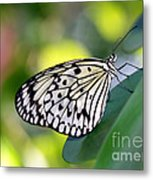 Beautiful Black N White Rice Paper Butterfly Metal Print