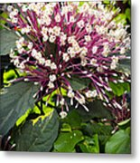 Beautiful Bloom Metal Print