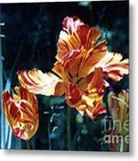 Gorgeous Tulip Metal Print