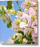 Beautiful Bougainvillea Flowers Against Blue Sky Metal Print